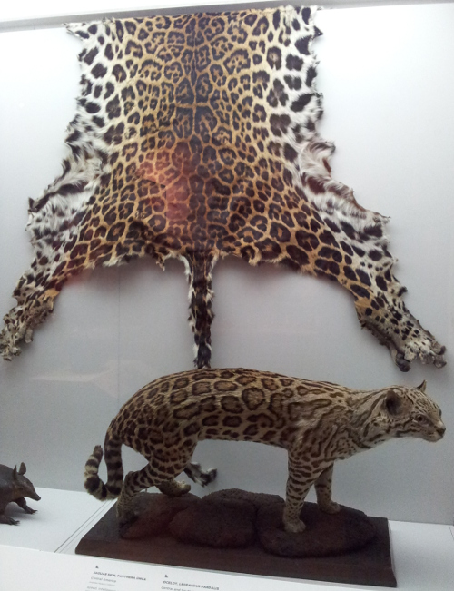 Jagtuar skin and ocelot