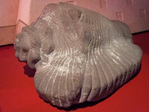 Sculpture of a conch shell Aztec, 900 - 1521 Basalt