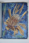 Conte crayon. Banksia at Kiama. Trying for bold, strong lines.