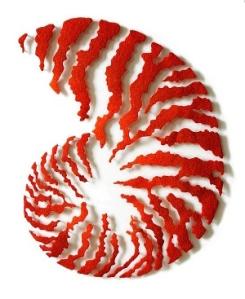 Meredith Woolnough Orange Nautilus