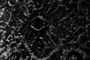 Patrick Delorey Erosia: Coal (Detail)