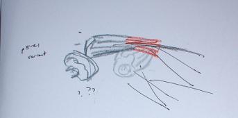 p5-sketch p5-21 variation