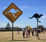 richardtipping_kangooroo